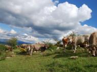 Viatge al Pallars.Pirineu de Lleida